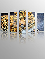 Leopard Looking into Distance on Canvas Wood Framed 5 Panels Ready to hang for Living Decor