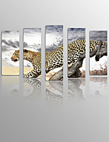 Panther on Canvas Wood Framed 5 Panels Ready to hang for Living Decor