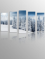 Snow Pine needles on Canvas wood Framed 5 Panels Ready to hang for Living Decor