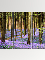 VISUAL STAR®3 Panel Lavender Forest Photos Print on Canvas Wall Decoration Landscape Canvas Artwork Ready to Hang