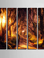 E-HOME® Stretched Canvas Art A Path In A Dense Forest Decoration Painting  Set Of 5