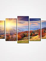 toile set / Unframed Toile Paysage / Nature morte / Loisir / A fleurs/Botanique Modern / Réalisme,Cinq Panneaux Toile HorizontaleImprimer