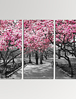 VISUAL STAR®3 Panel Cherry Blossom Photos Print on Canvas Wall Decoration Landscape Wall Art Ready to Hang