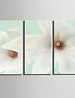 toile set A fleurs/Botanique Style européen,Trois Panneaux Toile Verticale Imprimer Art Décoration murale For Décoration d'intérieur