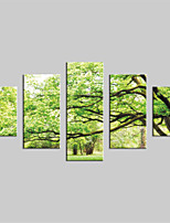 JAMMORY Canvas Set Landscape Modern,Five Panels Gallery Wrapped, Ready To Hang Vertical Print No Frame Big Trees