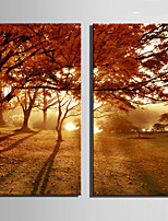 E-HOME® Stretched Canvas Art The Sunset Under The Maple Decoration Painting  Set Of 2