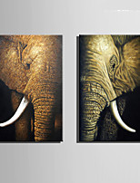 E-HOME® Stretched Canvas Art Elephant Decoration Painting  Set Of 2