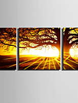 E-HOME® Stretched Canvas Art Big Trees Under The Setting Sun Decoration Painting  Set Of 3