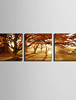 E-HOME® Stretched Canvas Art Light Forest Decoration Painting  Set of 3
