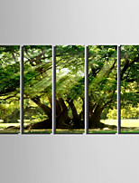 E-HOME® Stretched Canvas Art The Sun Shines Under The Tree Decoration Painting  Set Of 5
