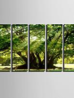 lienzo conjunto Paisaje Estilo europeo,Cinco Paneles Lienzos Vertical lámina Decoración de pared