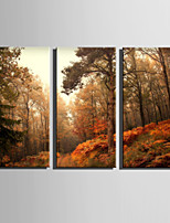 E-HOME® Stretched Canvas Art Forest Landscape Decoration Painting  Set Of 3