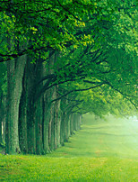 JAMMORY Wallpaper For Home Wall Covering Canvas Adhesive required Mural Surrounded by Greenery Landscape3XL 14'7''*9'2''