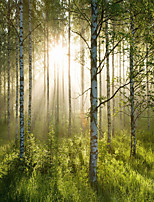 JAMMORY Wallpaper For Home Wall Covering Canvas Adhesive required Mural Forest sun 3XL(14'7''*9'2'')