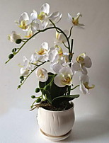 Butterfly Orchid Miniascape of Handmade Silk Cloth Simulation