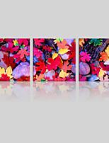 Canvas Set Landschap / Bloemenmotief/Botanisch Modern,Drie panelen Canvas Vierkant Print Art wall Decor For Huisdecoratie