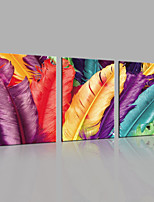 JAMMORY Canvas Set Landscape Modern,Three Panels Gallery Wrapped, Ready To Hang Vertical Print No Frame Big Feather