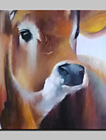 Hand Painted Cow Animal Oil Paintings On Canvas Modern Wall Art Picture With Stretched Frame Ready To Hang 80x80cm