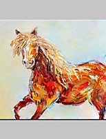 Hand Painted Horse Animal Oil Painting On Canvas Wall Art For Home Decoration With Stretched Frame Ready To Hang