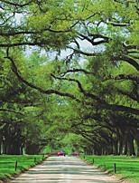 Деревья / Листья Обои Для дома Современный Облицовка стен , Холст материал Клей требуется фреска , номер Wallcovering