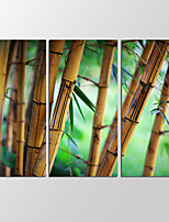 VISUAL STAR®3 Panel Bamboo Forest Photos Print on Canvas Wall Decoration Canvas Art Ready to Hang