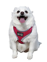 Funtional Reflecting Mesh Pets Safety Belt Harness for Pets Dogs
