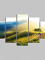 Impressão em tela sem moldura Paisagem Moderno,5 Painéis Tela Qualquer Forma Impressão artística wall Decor For Decoração para casa