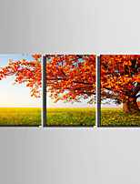 E-HOME Stretched Canvas Art A Red Tree On The Grass Decoration Painting  Set Of 3