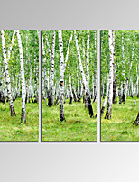 VISUAL STAR3 Panel Grove Photos Print on Canvas Wall Decoration Canvas Art Ready to Hang