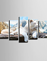 E-HOME Stretched Canvas Art The Top Of The Mountain Lion Decoration Painting  Set of 5
