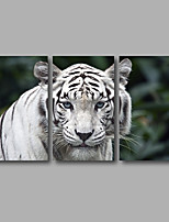 Stretched Canvas Print Three Panels Canvas Wall Decor Home Decoration Abstract Modern White Tiger