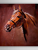 Hand-Painted  Abstract Horse's Head  Canvas Oil Painting With Stretcher For Home Decoration Ready to Hang