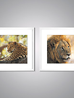 Framed Canvas Prints  A Leopard and A Head of Lion Picture Print on Canvas Contemporary Animal Wall Art for Decoration