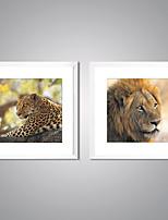 Lonas Estampadas com Moldura Vida Imóvel Animal Moderno Realismo,2 Painéis Tela Quadrangular Impressão artística Decoração de Parede For