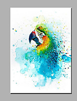 Hand-Painted Animal  Blue Parrot Ready To Hang  Modern One Panel Canvas Oil Painting For Home Decoration