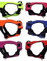 Собаки Жилет Упряжки Одежда для собак Весна/осень Однотонный Мода Оранжевый Красный Зеленый Синий