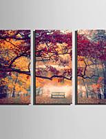 Paysage A fleurs/Botanique Moderne,Trois Panneaux Toile Verticale Imprimer Art Décoration murale For Décoration d'intérieur
