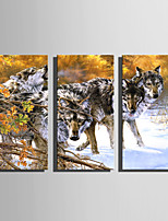 E-HOME Stretched Canvas Art Wolves in The Snow Decoration Painting Set Of 3