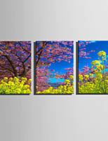 E-HOME Stretched Canvas Art  Spring Breath Decoration Painting Set Of 3