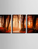 E-HOME Stretched Canvas Art  The Woodland Path At Dusk Decoration Painting Set Of 3