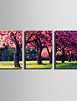 E-HOME Stretched Canvas Art  Flowers Blooming In Trees Decoration Painting Set Of 3