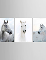 Canvas Set Famous Animal Classic Traditional,Three Panels Canvas Vertical Print Wall Decor For Home Decoration