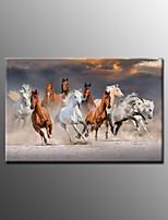 Tirages Photographique Animal Moderne,Un Panneau Toile Horizontale Imprimer Art Décoration murale For Décoration d'intérieur