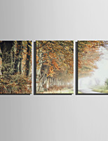 E-HOME Stretched Canvas Art  Autumn Trees Scenery Decoration Painting Set Of 3