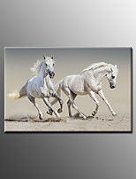 Photographic Print Animal Modern,One Panel Canvas Horizontal Print Wall Decor For Home Decoration