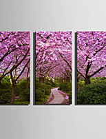 E-HOME Stretched Canvas Art Pink Grove Decoration Painting Set Of 3