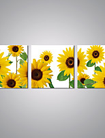 Stretched Canvas Prints Sunflowers Picture Print Contemporary Art for Livingroom Decoration