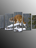 Photographic Print Animal Modern,Five Panels Canvas Any Shape Print Wall Decor For Home Decoration