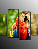 Tirages Photographique Animal Moderne,Quatre Panneaux Toile Horizontale Imprimer Art Décoration murale For Décoration d'intérieur