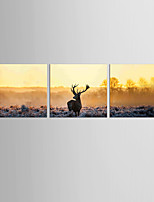 Canvas Set Abstract Animal Classic European Style,Three Panels Canvas Square Print Wall Decor For Home Decoration